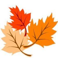 Autumn Wonderings